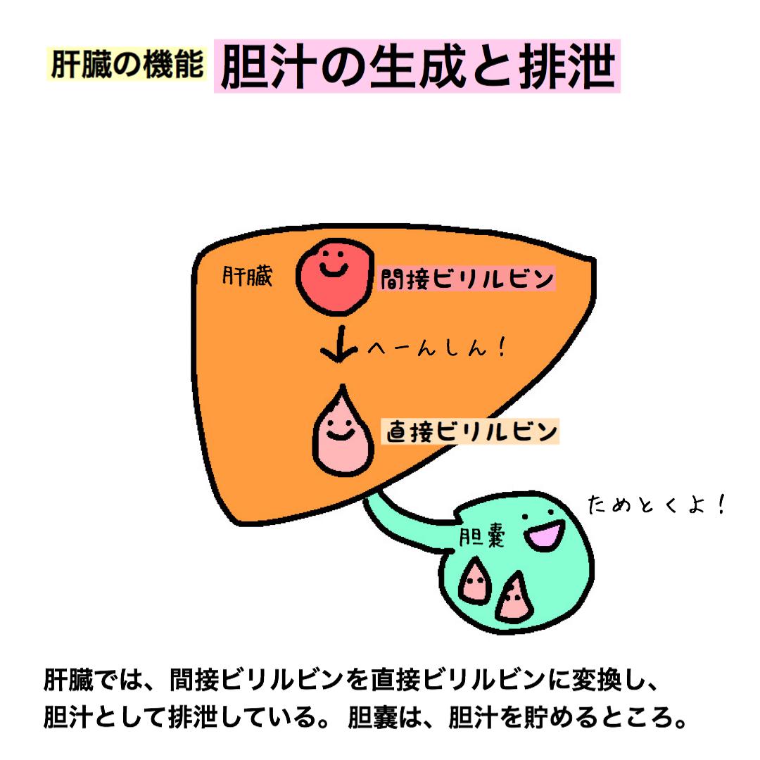 肝臓の機能 胆汁 看護師
