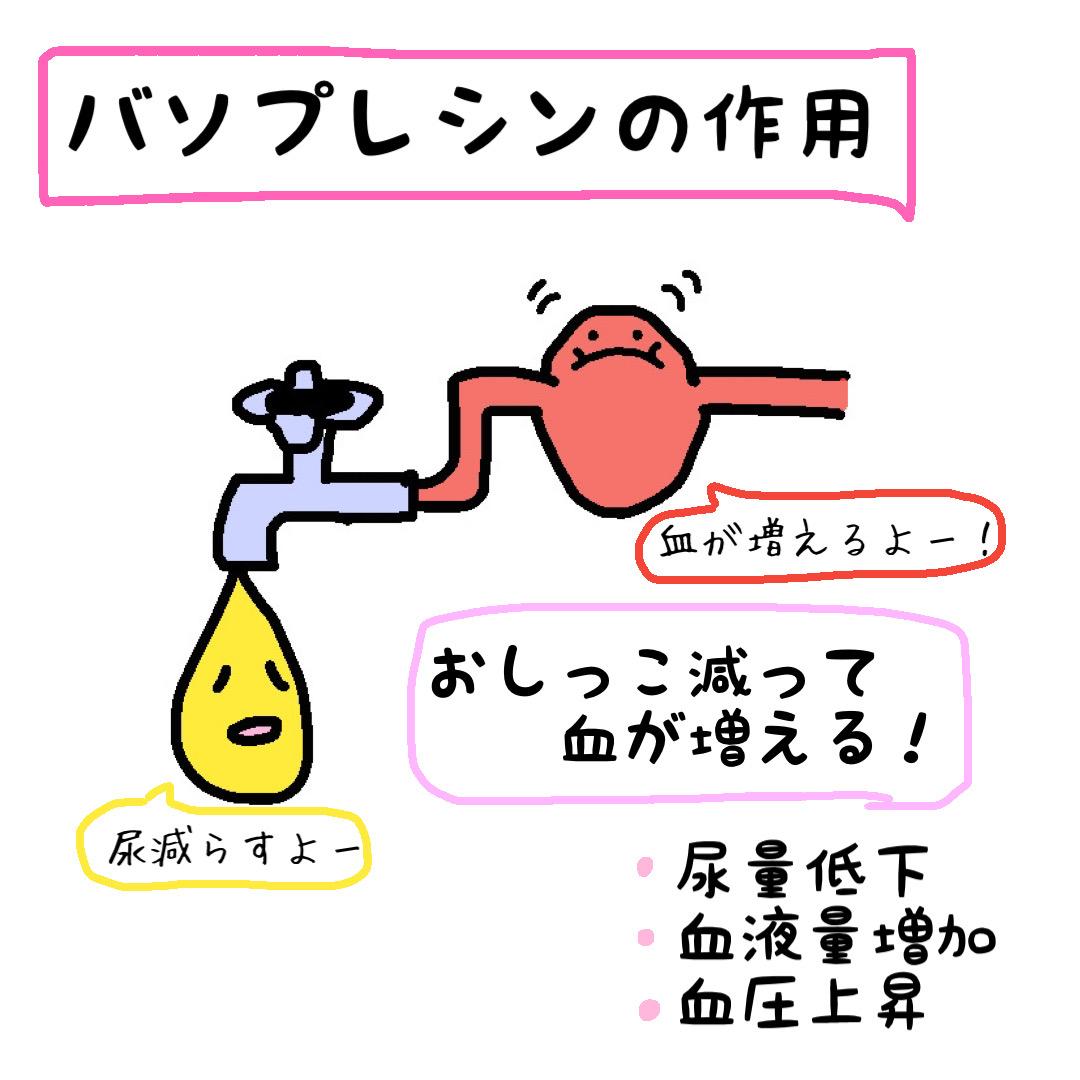 バソプレシン 作用